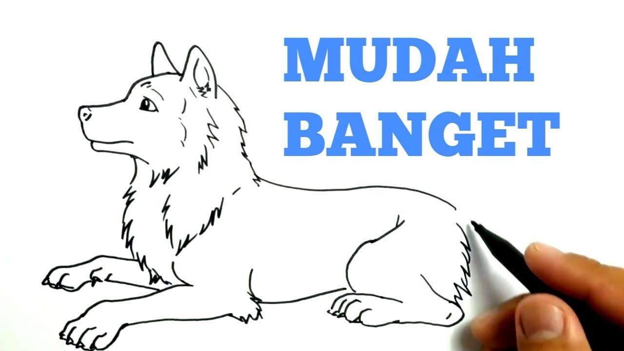 Cara Menggambar Anjing Srigala Dengan Mudah