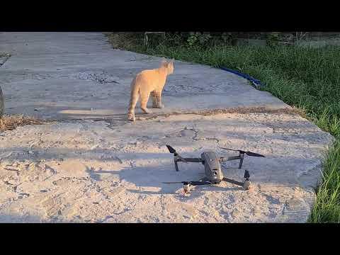 Slawa Gorobets: Кот и дрон