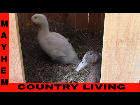 How to build a duck house for free