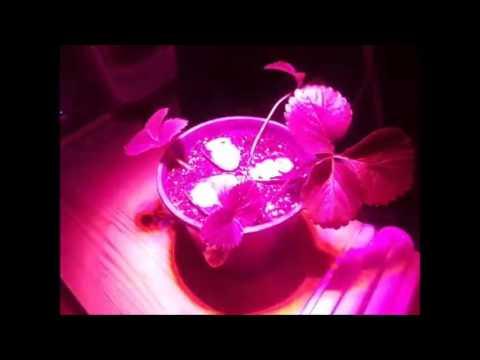 eclairage pour plantes oxyled gl01 lampe plante lampe commentaire la lampe id ale pour la. Black Bedroom Furniture Sets. Home Design Ideas