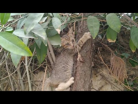 Kittens Are Happy Climbing On Tree After Mother Cat Came Back