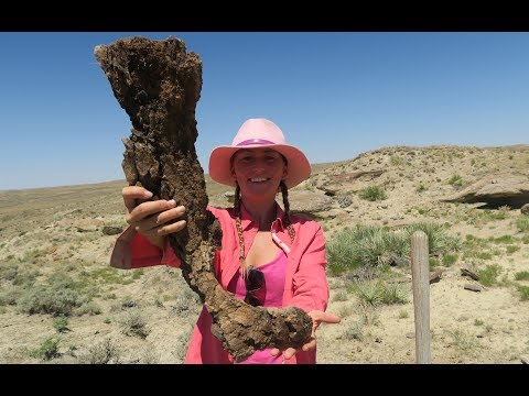 Alison Teal uncovers 65 million year old triceratops jaw bone
