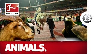 Horses, Dogs and More - Animals in the Bundesliga - Advent Calendar Number 13