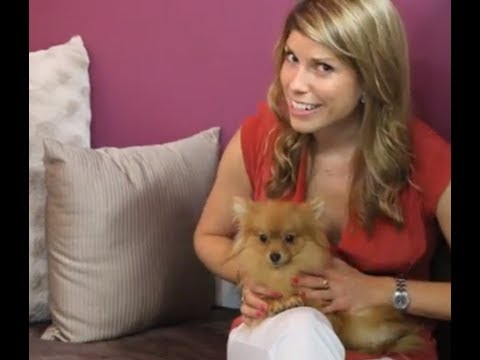 D PET HOTEL: A Luxury Boutique Hotel For Your Pooch!