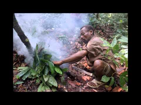 Mbuti Pygmies       Song after collecting honey & hunting song