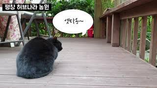 [차없이 편한여행] 평창 당일치기여행 (서울 - KTX…