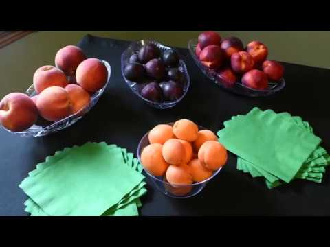 Care Tips for Peaches, Nectarines, Plums, and Apricots