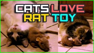 Cute Cat Video: Funny Kitties love Rat !