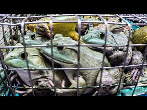 Alive Food in Chinatown Complex Wet Market - Frogs, Crabs, Fish. Singapore Street Food