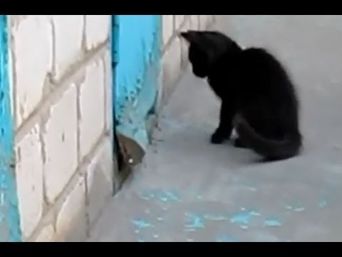 Cat Save a Dog