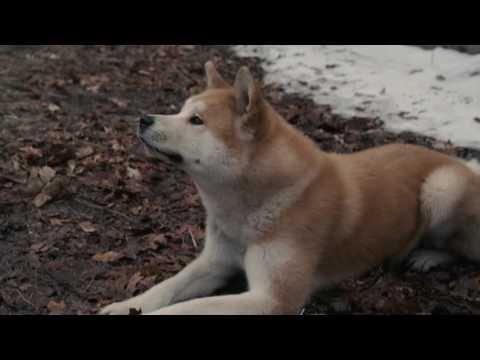 AFFIRM Films Presents: Hachi: A Dog's Tale