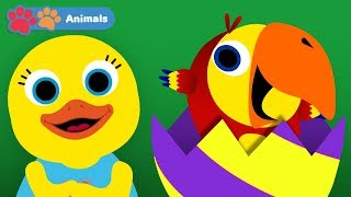 Animals Compilation With Larry Surprise Eggs & Tillie The Duck   Early Learning Videos for Toddlers