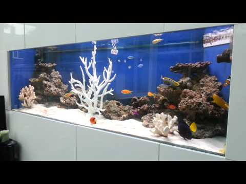 Mon aquarium marin doovi for Fish only saltwater tank