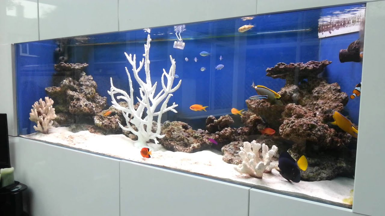 Saltwater fish only aquarium with tangs angelfish clown fish and coral deco - Decoration marine maison ...