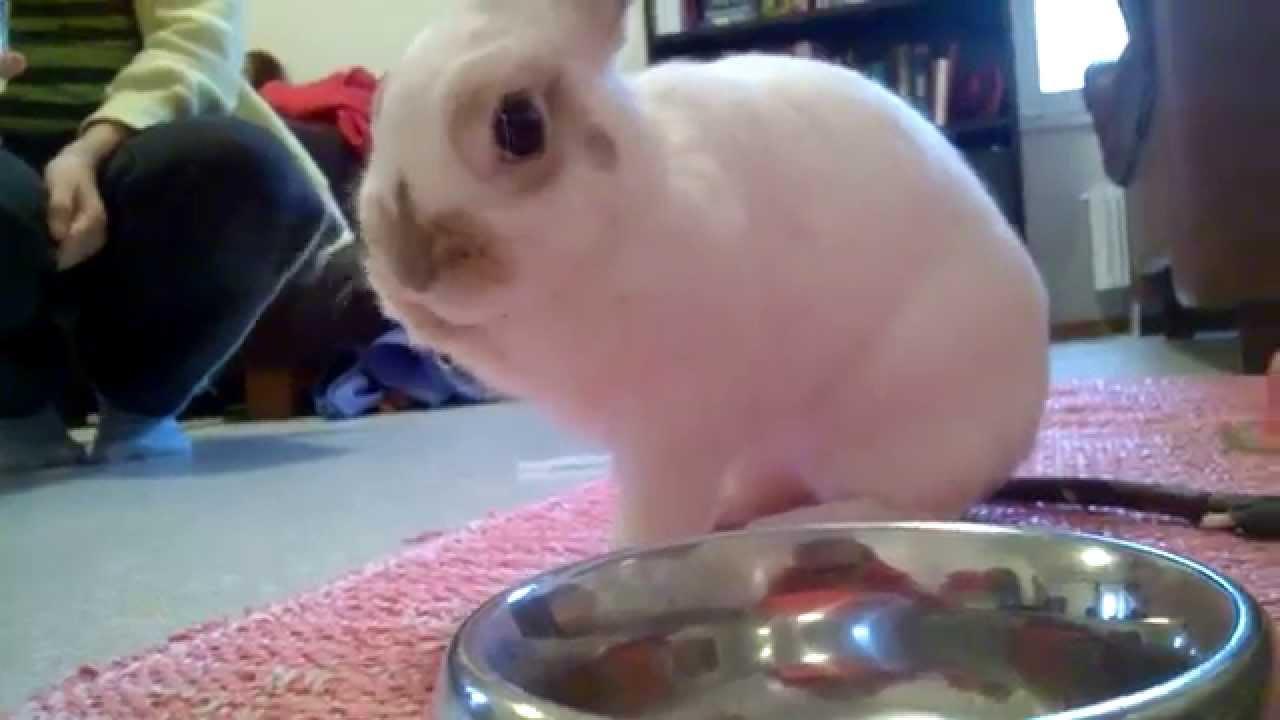 Bunny drinking pineapple juice   YouTube