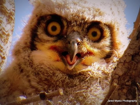 Momma Owl and Baby Owlets