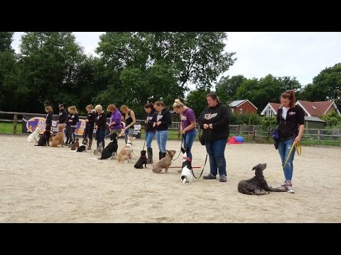 Home Boarding Residential Dog Training with Adolescent Dogs Ltd  - 2017