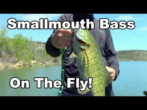 Smallmouth On The FLY - Fly Fishing For Smallmouth Bass - McFly Angler Episode 18