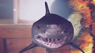ESHAM - SHARK FOOD