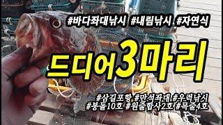 삼길포 만석좌대 자연식 우럭낚시 드디어 3짜 3마리