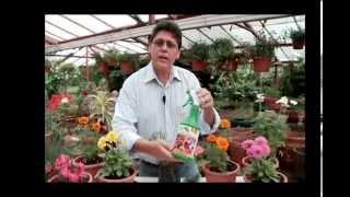 fertilizante plantas con flores