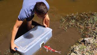 Download FISH-TRAP CATCHES COLORFUL FISH For Massive AQUARIUM FISH!! Mp3 and Videos