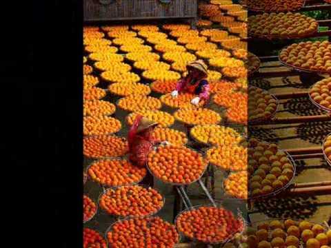 新埔的柿餅 0001 - YouTube