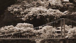 さくら - ケツメイシ(フル)