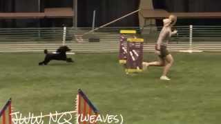 Diego Akc Agility, Poodle Club Of America 2014