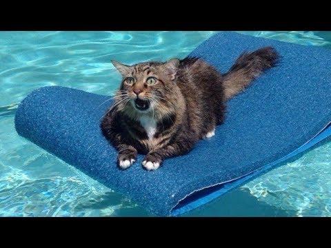 dying cat behavior