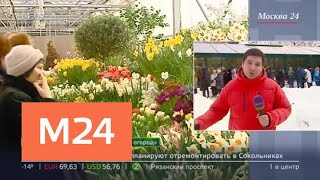 Очереди выстроились на выставку тюльпанов в