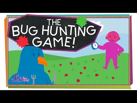 The Bug Hunting Game! | Science For Kids