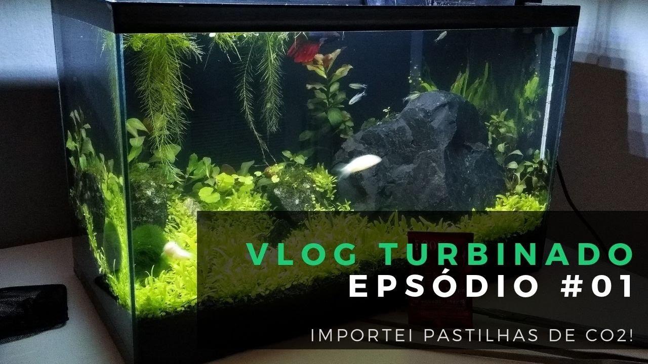 ? Vlog 01: Importei Pastilha de CO2 para meu Aquário Plantado de 20 litros