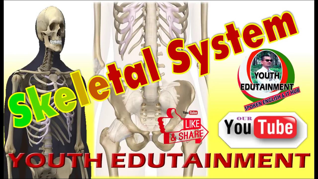Notes On 206 Bones Name Human Skeletal System With Diagram Youtube