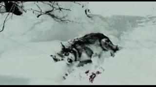 Il lupo e la dignità