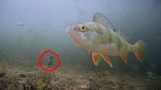 Насадил ЛЯГУШКУ на ЖЕРЛИЦЫ И вот что произошло Рыбалка на щуку Подводная съемка