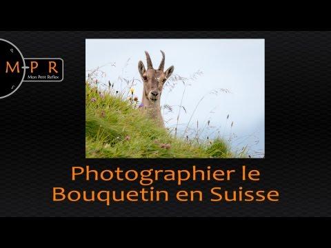 Allons photographier le bouquetin en Suisse !       1/4 heure photo animalier en rando avec Julien !