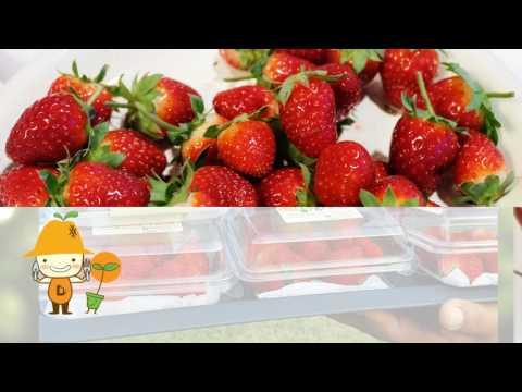 Daily Green Organic Farm Organic Fresh Figs