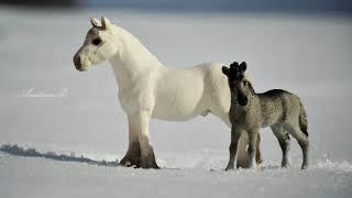Слайд шоу , фото лошадей ч.о срочноо это я коняшка няшкааа ,!ребята помогите