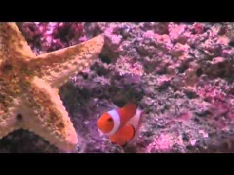 Acquario cernia e pesci pagliacci youtube for Acquario tartarughe e pesci insieme