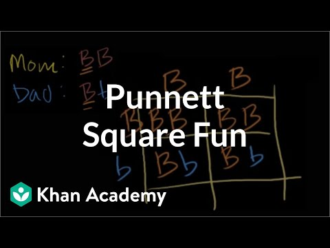 Punnett square fun | Biomolecules | MCAT | Khan Academy