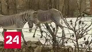 московский зоопарк переходит на весенний режим работы - Москва 24