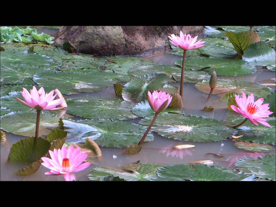 A Beautiful Buddhist Crystal MUSIC for Meditation      Qigong   Yoga , Spa  , & TaiChi !