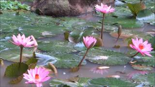 A Beautiful Buddhist Crystal MUSIC for Meditation .....Qigong . Yoga , Spa , & TaiChi !