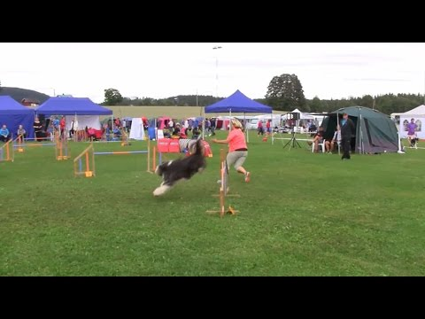Bearded Collie Joy, Agility Jumping 2 Large, Nes, August 7, 2016