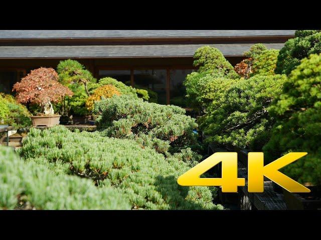 Omiya Bonsai Village – Saitama – 大宮盆栽村 – 4K Ultra HD