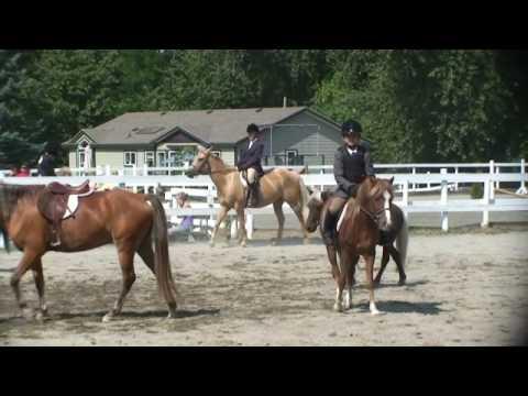 Download Unedited footage Ren Bennett Flat Classes Sunnyside Saddle club Aug 30 09