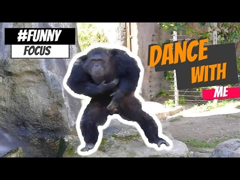 TRY NOT TO LAUGH – Best Funny Animals Video