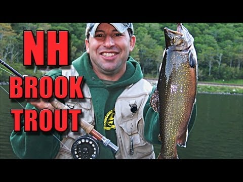 Fly Fishing For Brook Trout In New Hampshire
