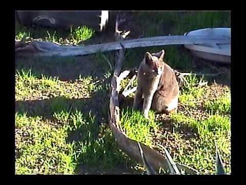 Cat Soup - Alkaline [video]